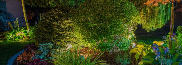 Enhancing Your Backyard Landscape