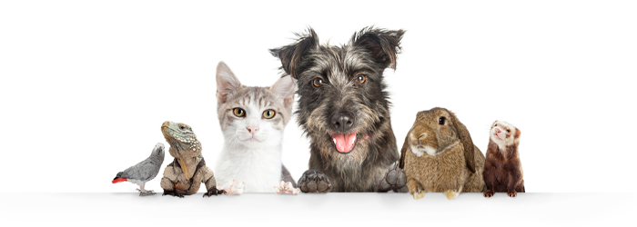 Protecting Pets From the Naughty Side of Nature